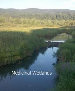 Medicinal Wetlands 2